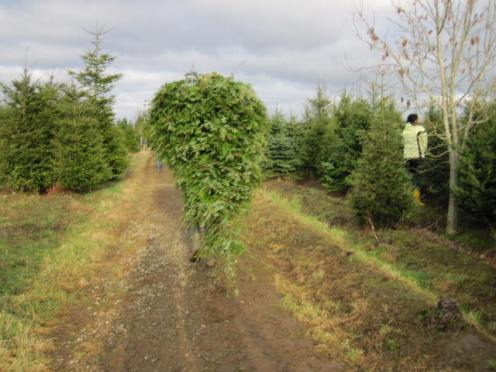 christmas-tree-farm-19