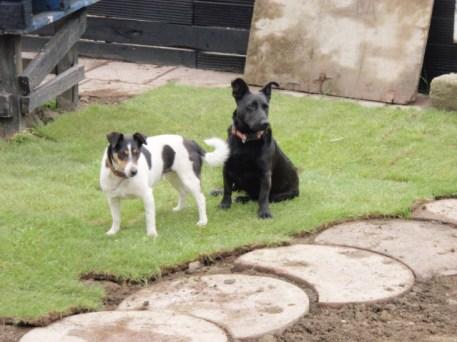 dublin-landscaping-347