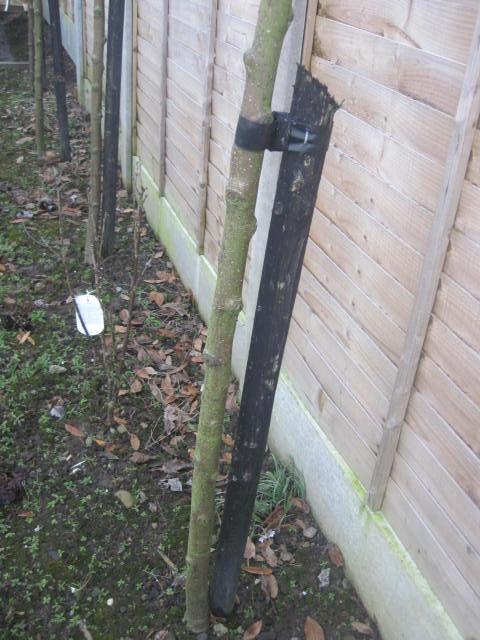 tree-strap-stake