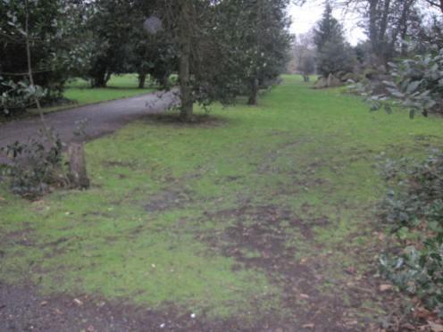 iveagh gardens (33)