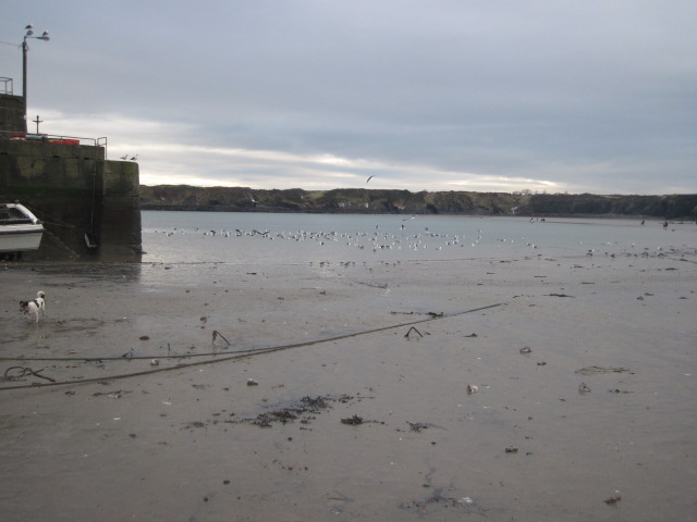 loughshinny beach (8)