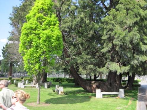 glasnevin cemetery 044