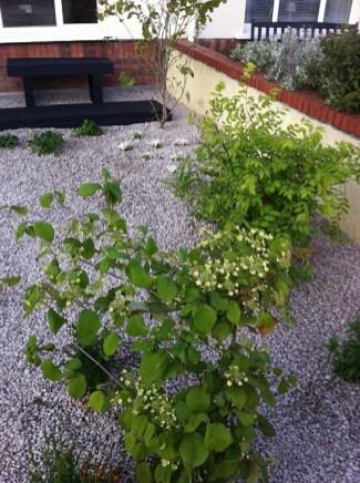 donegan small garden