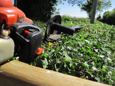 hedge cutting 022