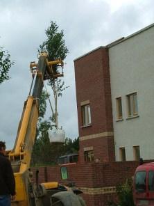 trees plant
