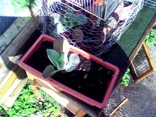 amateur gardening (2)