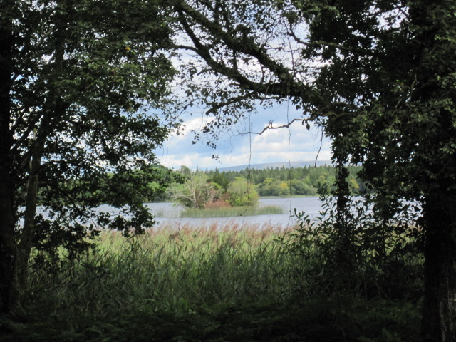 lough key forest (53)