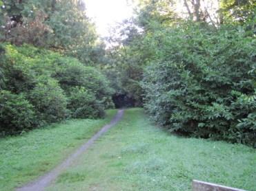lough key forest (7)