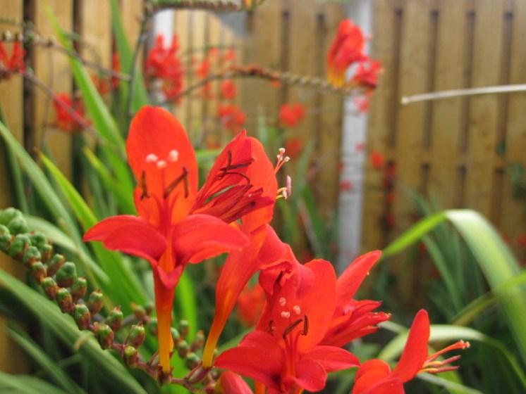 Garden maintenance peter donegan landscaping dublin for Gardening qualifications
