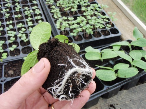 plants planters