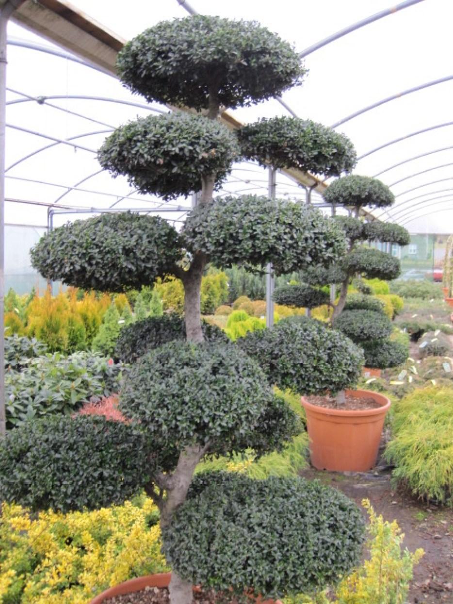 unusual plant planters donegan