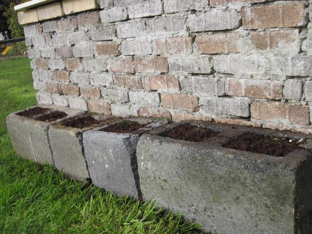 grow seeds in cavity blocks (5)