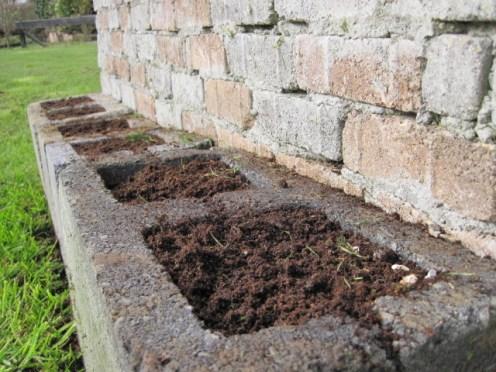 grow seeds in cavity blocks (6)