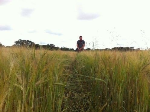 field of barley