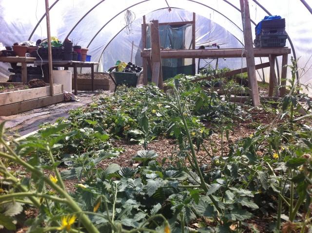 peter mcverry trust gardening (11)