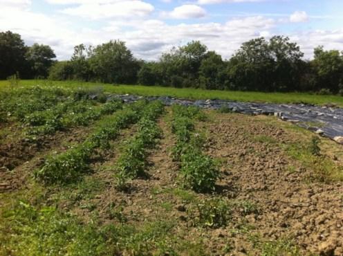peter mcverry trust gardening (16)