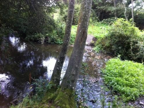 hedgerow walk heritage week 2011 (16)