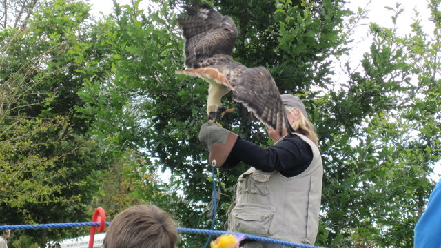 newgrange falconry - spirit of folk 2011 (16)
