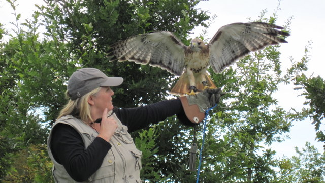 newgrange falconry - spirit of folk 2011 (18)