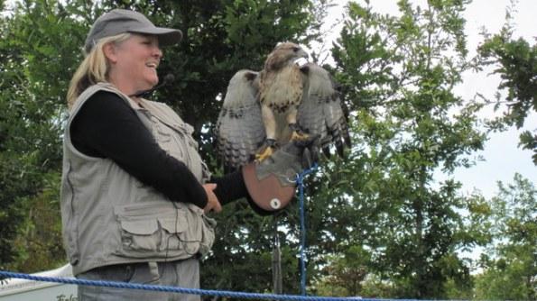 newgrange falconry - spirit of folk 2011 (20)