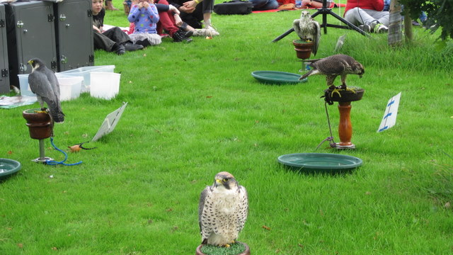 newgrange falconry - spirit of folk 2011 (8)
