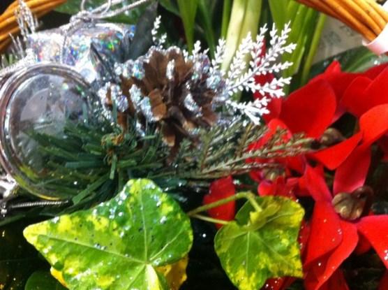 irish plants christmas (1)