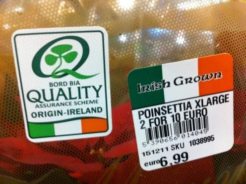 irish plants christmas (2)