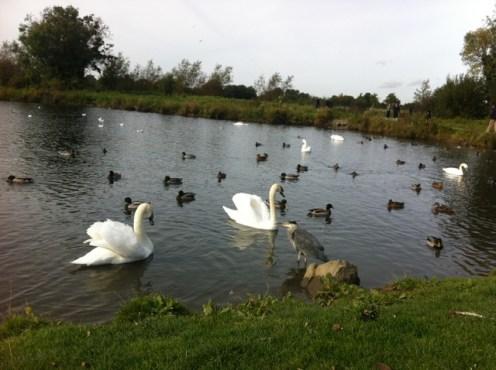 corkagh park (2)