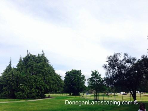 phoenix park trees (3)