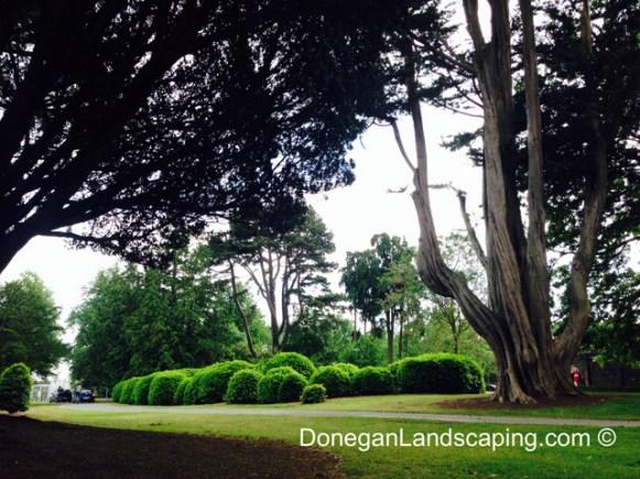 phoenix park trees (7)