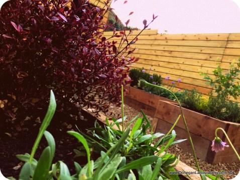 donegan landscaping dublin, back garden (8)