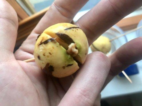 avocado growing, indoors, donegan