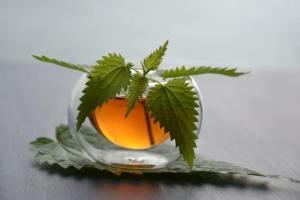 naturopathic doctor herbs