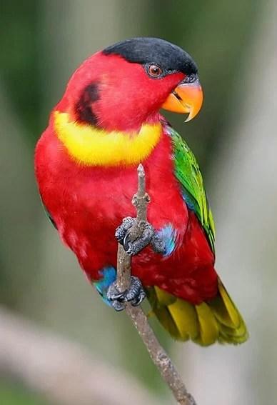 Dongeng Fabel Tupai Dan Burung Nuri