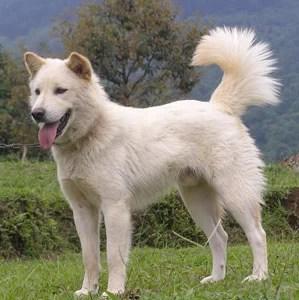 Cerita Dongeng Anak Tentang Hewan Anjing Gunung dan Anjing Peliharaan