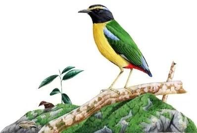 Cerita Dongeng Hewan Kisah Burung Gelatik