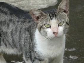 Contoh Cerita Hewan Fabel  Kucing Kota Dan Kucing Desa