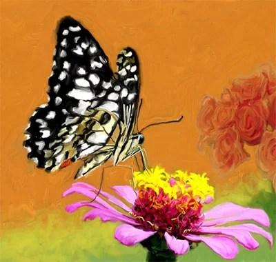 Cerita Rakyat Si Kancil, Kupu-kupu dan Laba-laba