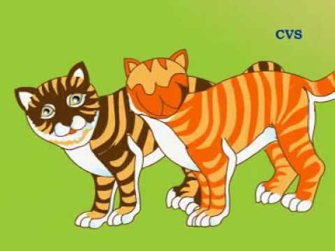 Cerita Dongeng Binatang Kisah Dua Kucing