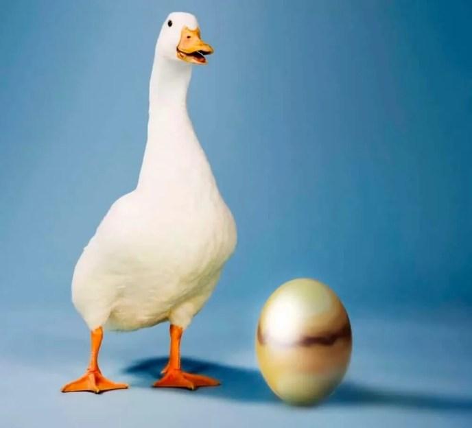 Cerita Anak Telur Emas