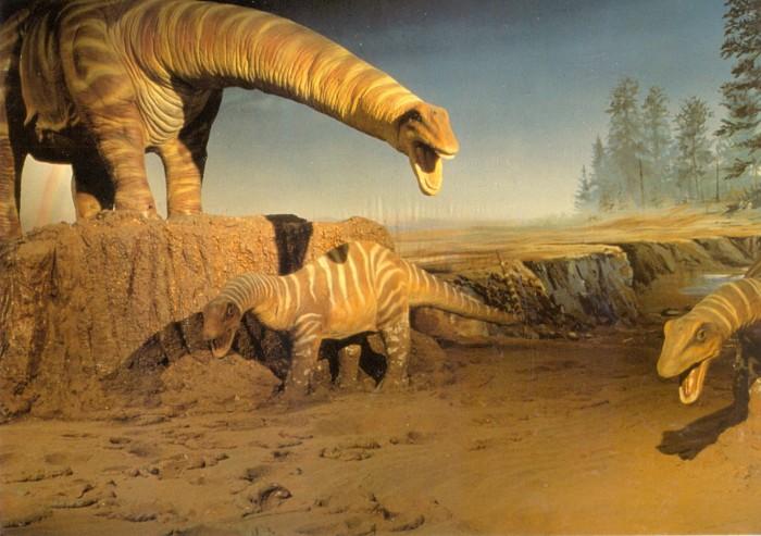Apatosaurus Femur