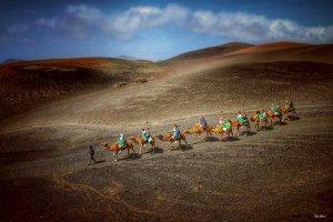 Lanzarote con camellos por Donibane