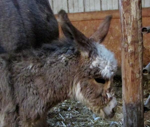 donkeys 006