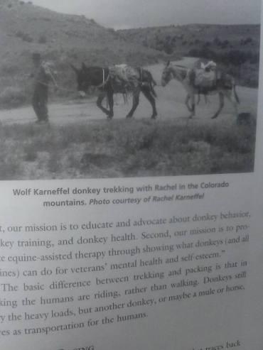 book of donkeys2
