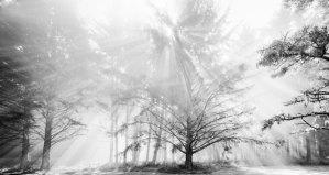 2005154 Sun,Fog,Trees, Cape Arago, OR 2005