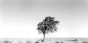 2006078 Lone Tree, Kiowa NGL, NM 2006