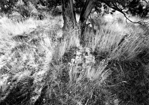 2006155 Trees & Grass, Crooked River NGL, OR 2006