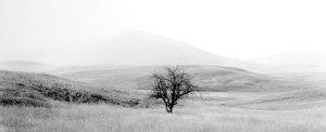 2007138 Lone Tree, Zumwalt Prarie, OR 2007