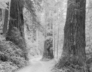 2009038 Prairie Creek Redwoods II, CA 2009