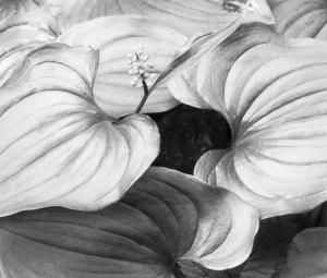 96093 May Lily, WA 1996